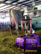 Fulp Wonderment Bambi Supreme Champion FFA Show 2013 Ozark Empire Fair