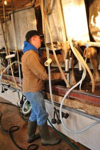 SAE Project---Dairy Placement Photo Courtesy of- Dakoda Baxter, son of Jason and Becky Baxter, Billings FFA Chapter- Missouri